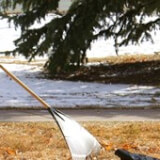 Tree Planting at Poudre Valley Mobile Home Park Profile Photo